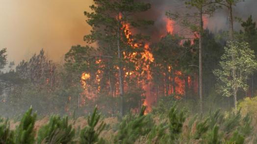 climate-emergency-amazon