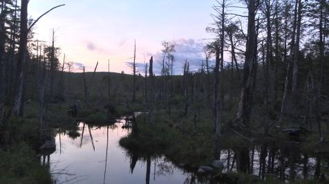 Great Swamp Northfield